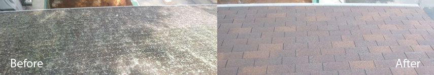 roof treatment for moss algae