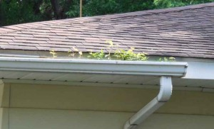 Gutter Installation Amp Cleaning St Cloud Mn Area